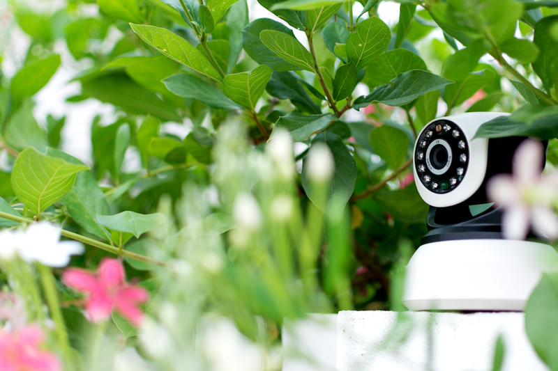 CCTV security camera in plants